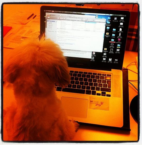 Il presidente di Coworking Cowo.